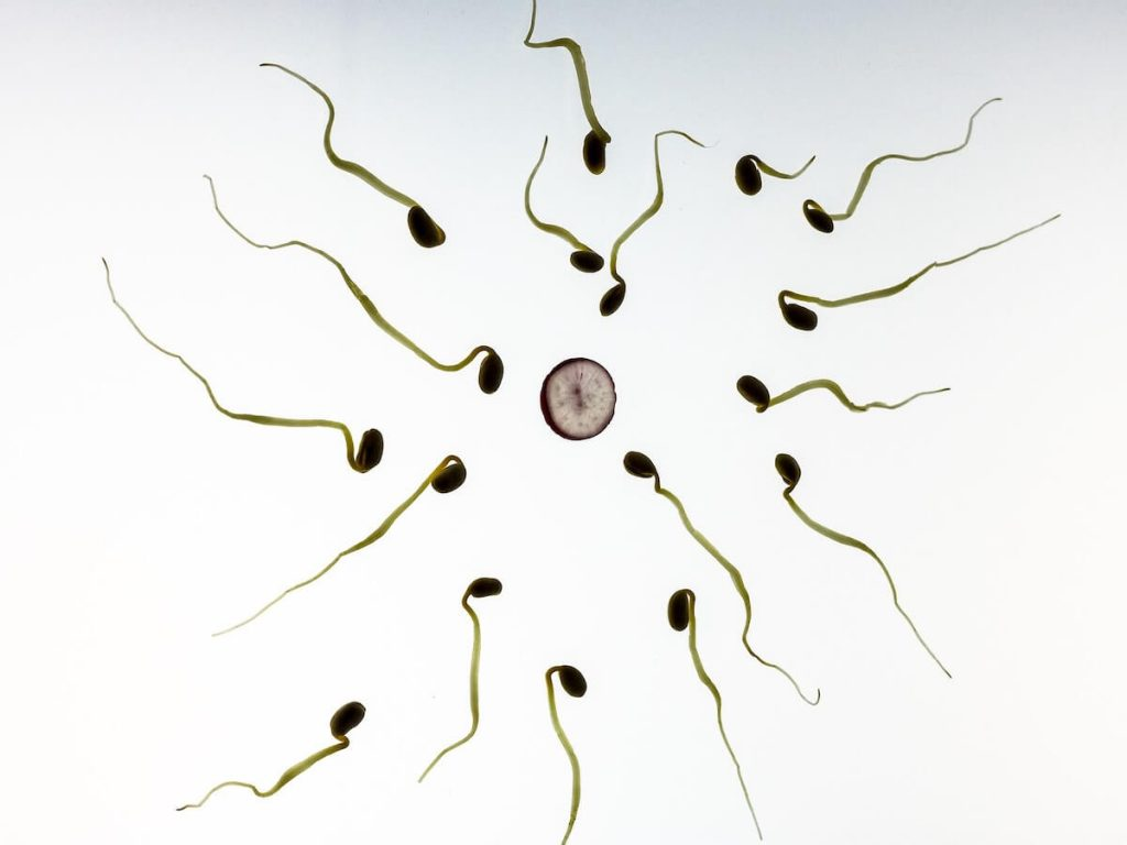 Anonymous miracle-workers – sperm and egg cell donors in Latvia!